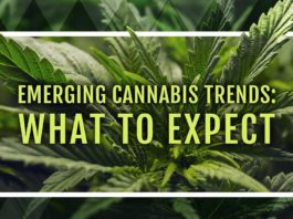 Cannabis and what to expect in 2019
